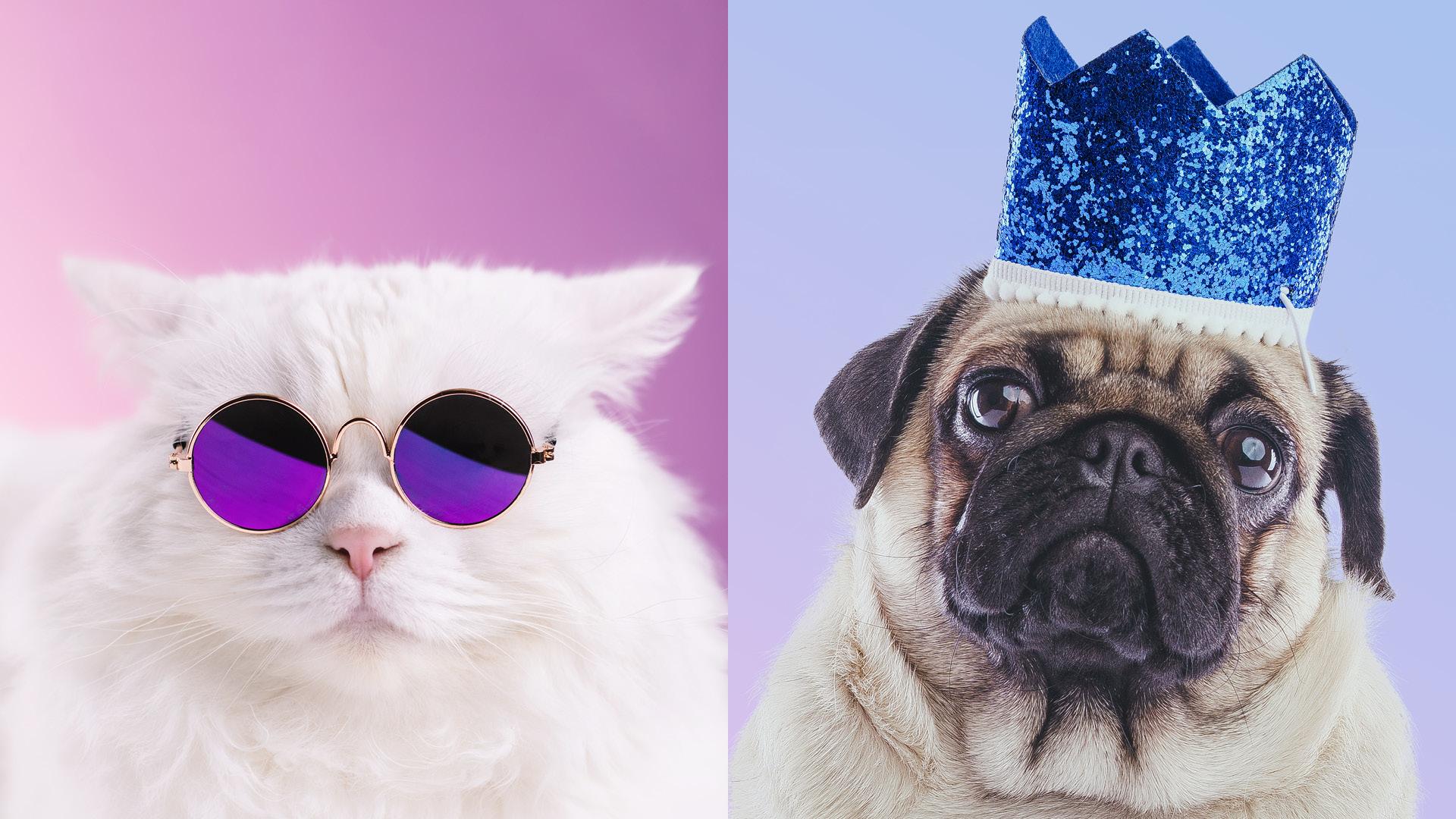Weiße Katze mit Sonnenbrille und Hund/Mops mit Krone
